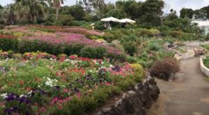 フラワーパークの花壇