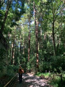 雑木林の坂道を下って行きます