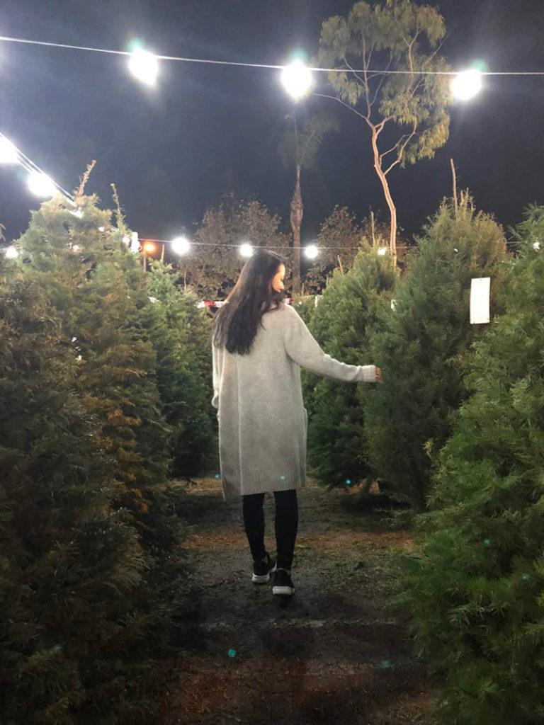 クリスマスツリーの販売風景 アメリカ