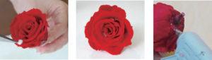花びらと花びらの間に小さくちぎったコットンやティッシュを詰めて、 バラをふっくらと広げます